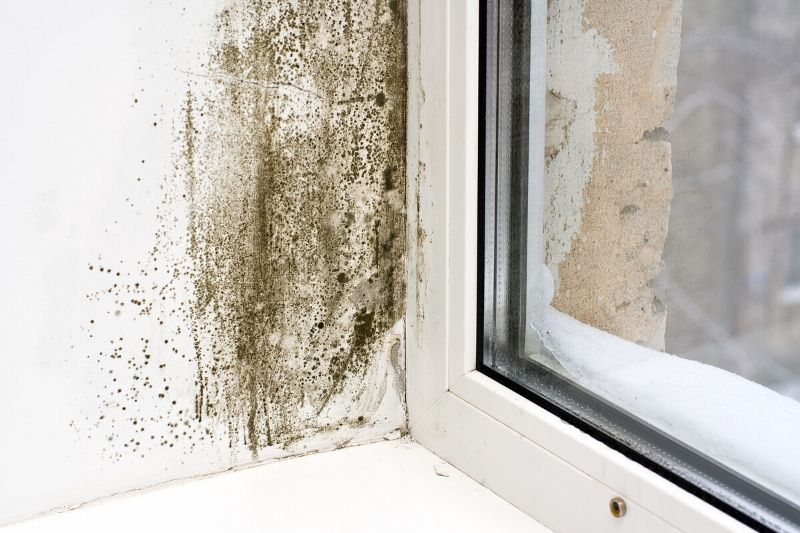 black mould rising damp